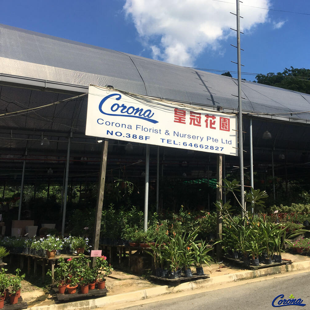 Corona Florist & Nursery -Plant Boutiques Singapore